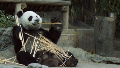 Sex-Wissen - Das Panda-Syndrom